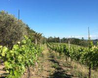 Vini artigianali Vitali (4)