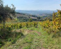 Vini artigianali Vitali (8)