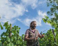 Vini-artigianali-Vittorini (4)