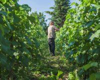 Vini-artigianali-Vittorini (5)