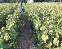 Vini-artigianali-Vittorini (7)