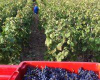 Vini-artigianali-Vittorini (8)