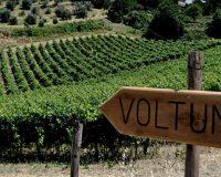 Vini artigianali Voltumna (2)_1