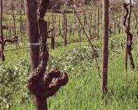 Vini artigianali Voltumna (3)