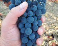 Vini artigianali Ciavola Nera (1)_1