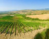 Vini artigianali Ciavola Nera (2)