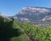 Vini artigianali Eredi di Cobelli Aldo (1)