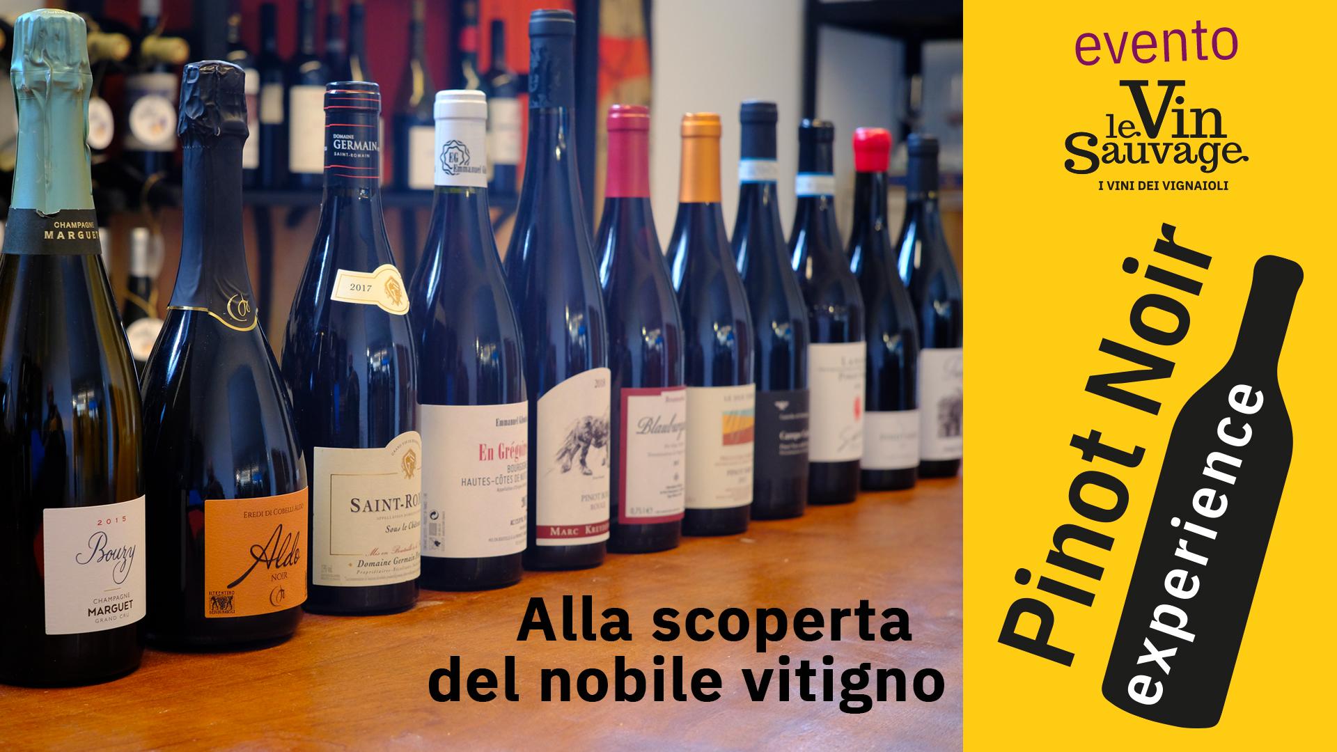 "Seminario ""Pinot Noir Experience"" di Mauro Mancini | 15 Ottobre 2020"